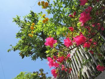 ピンクと黄色と青い空.JPG