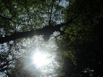大きな木の下で.JPG