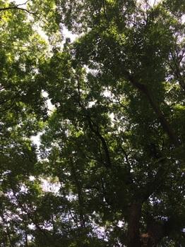 木々☆.jpg